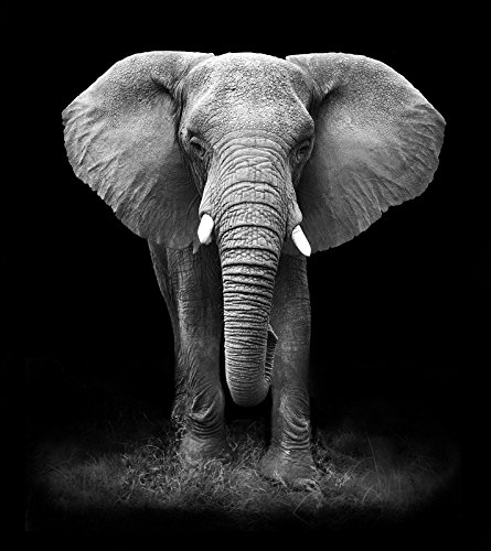 Wild Animals Wall (Black and White African Wild Animal Wall Art Painting Print on Canvas Beautiful Decorative Picture from Photo (Framed 24 x 36 Inch))