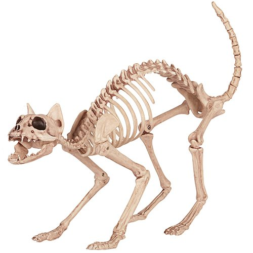 Cat Skeleton - Crazy Bonez Skeleton