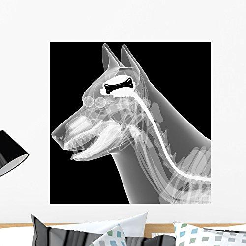 Dog Anatomy X-ray - 9