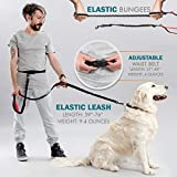 Retractable Hands Free Dog Leash with Triple