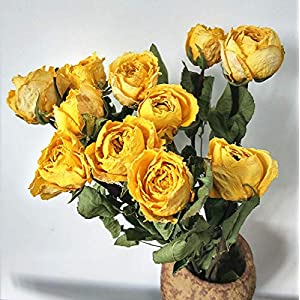 """10 Stems Dry Flowers Dried Nature Rose Flowers Decorative Preserved Rose Dry Bouquet for Wedding Floral Arrangements, 20"""" -24"""" Tall Home Decorations (Yellow) 10"""