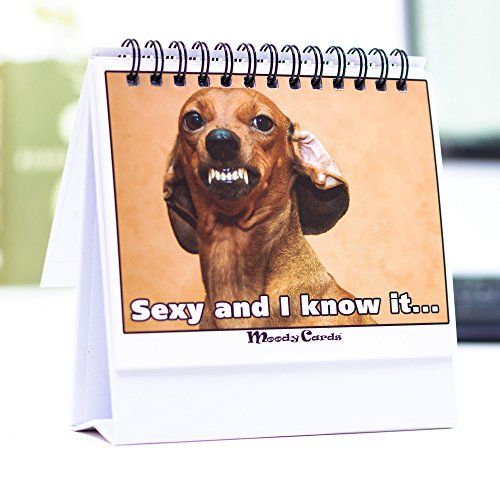 Funny Office Gifts - Doggy Moodycards! Great Cubicle Accessories - Make Everyone Laugh with These Lovable Pets -Hilarious Dog Pictures Tells Everyone How You Feel - Fun, Hilarious, Useful & Adorable (Calendar Today Desk)