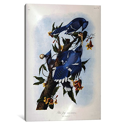 iCanvasART 3-Piece Blue Jay Canvas Print by John James Audubon
