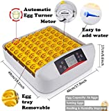 Egg Incubator for Hatching 56 Chicken Eggs with