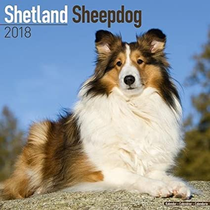 Shetland Sheepdog Calendar - Dog Breed Calendars - 2017-2018 wall Calendars - 16 Month by Avonside