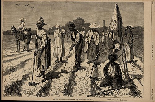 seeding-cotton-fields-black-sharecroppers-nice-1875-great-old-print-for-display
