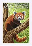 Point Defiance Zoo and Aquarium - Red Panda (12x18 Giclee Art Print, Gallery Framed, White Wood) offers