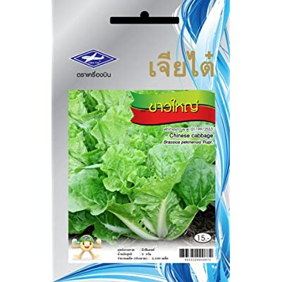 Chinese Cabbage (2100 Seeds) Seeds - 1 Package From Chai Tai, Thailand : Vegetable Plants : Garden & Outdoor