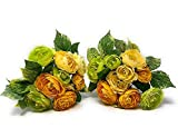 "RAZ Imports Set of 2 Artificial Flowers Bouquet Ranunculus Bundle Ornamental Wall Table Wedding Party Decoration Arrangements 8.5"" H (Creme/Yellow/Pale Green)"