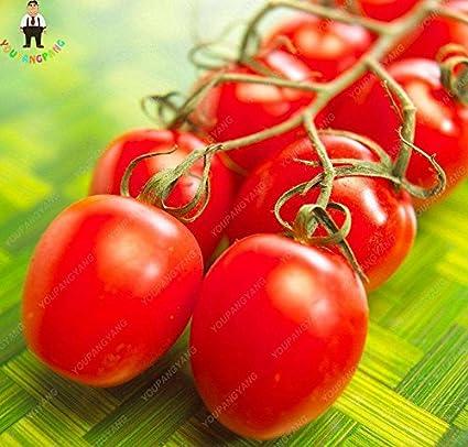 Tomate Plum Tigris a strisce semi raramente bottiglie-pomodori Fantastico Regalo 10
