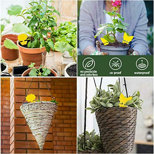 Sticky Fruit Fly Traps for Indoor and Outdoor Use Fly Trap Mosquito Eradicator for Indoor Plants and Houseplant 24 Pack