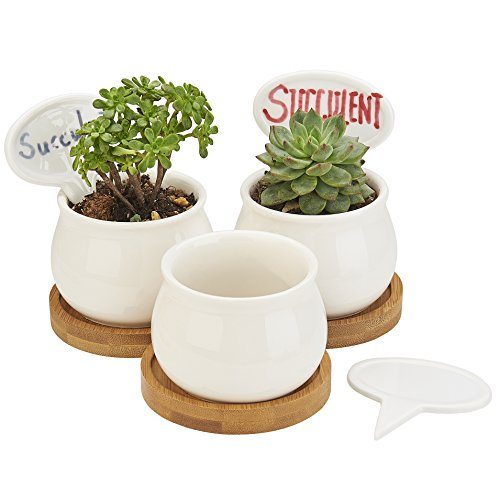 FLOWERPLUS Planter Pots Indoor, 3 Pack 2.75 Inch White Ceramic Small Round Succulent Cactus Flower Plant Pot with Bamboo Tray and Little Plants Signs for Indoors Garden Kitchen Decor