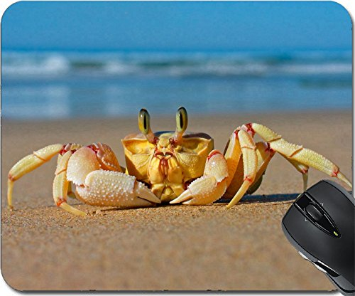 Price comparison product image MSD Natural Rubber Mousepad Mouse Pads/Mat design: 569442 Alert sand crab on beach southern Africa