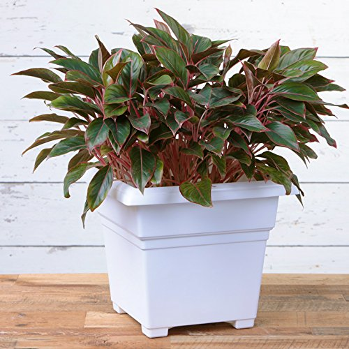 Novelty Countryside Square Tub Planter