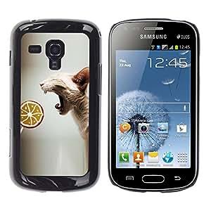 COVERO Samsung Galaxy S Duos S7562 / sphynx oriental cat skinless breed lollipop / Prima Delgada SLIM Casa Carcasa Funda Case Bandera Cover Armor Shell PC / Aliminium