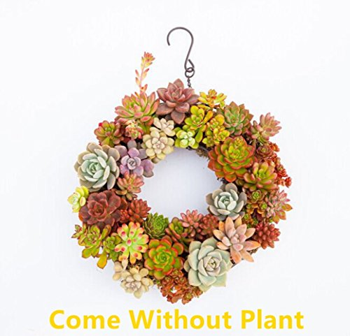 Succulent Pot Iron Hanging Planter Plant holder Box