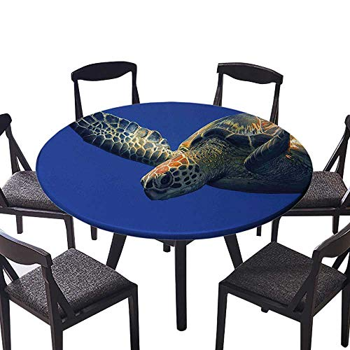 Round Premium Tablecloth Up Photo of Green Turtle at Sipadan Borneo Malaysia Cute Animal Under The Stain Resistant 35.5