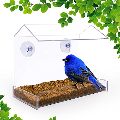Outside Window (NEWCREA Clear Window Bird Feeder - Squirrel Proof Bird Feeder Window for Bird Seed- Suction Cup Bird Feeder for Outside Wild Bird,like cardinals,Hummingbird,Finch (Acrylic))