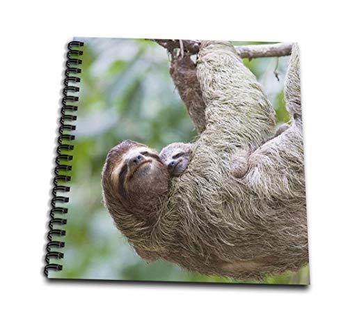 Danita Delimont–Wildlife–brown-throatedナマケモノ野生生物、コスタリカCorcovado–sa22jgs0015–Jim Goldstein–Drawing Book 4 x 4` db_87170_3