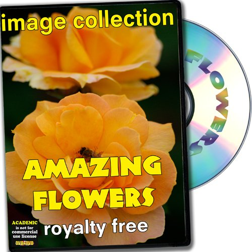 Royalty Free Photographs Flowers - Amazing Flowers, Royalty Free Image Collection, Academic License
