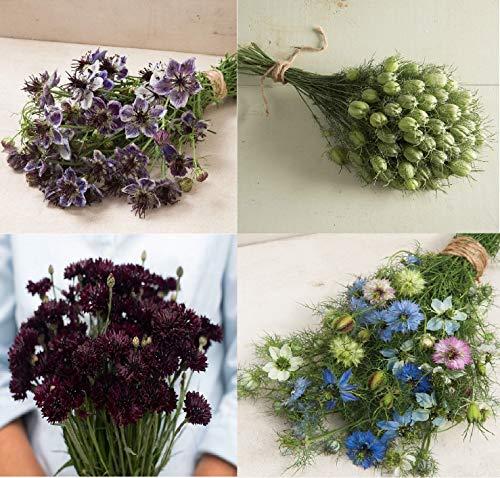 - David's Garden Seeds Collection Set Flower Nigella ND9042SV (Multi) 4 Varieties 650 Non-GMO, Open Pollinated, Heirloom Seeds