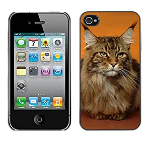 PC/Aluminum Funda Carcasa protectora para Apple Iphone 4 / 4S Maine Coon Cat Orange House Pet / JUSTGO PHONE PROTECTOR