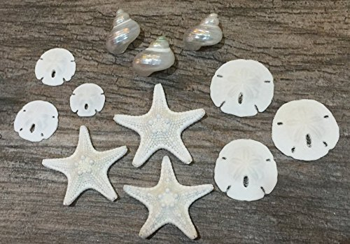 Miniature White Wedding Nautical Mix | 12 Pieces | Includes White Knobby Starfish, Sand dollars, Mother of pearl turbo shells all under 2