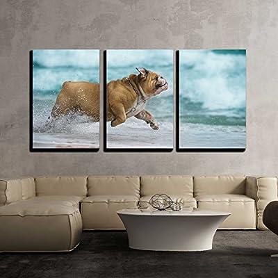 Bulldog Running Wild - 3 Panel Canvas Art