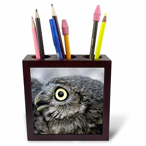 3dRose ph_9930_1 Little Owl, Athena Noctua, Aragon Spain Europe 5-Tile Pen Holder, 5-Inch by 3dRose