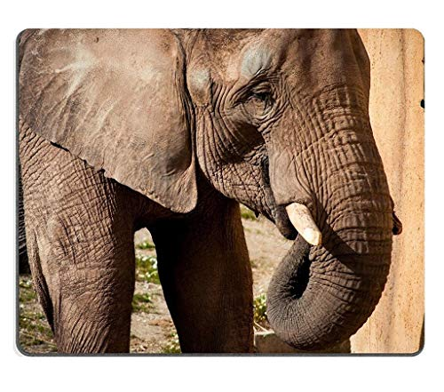 Natural Rubber Gaming Mousepad The African Elephant in Lisbon Zoo Portugal (Mouse pad/Gaming Mouse pad)