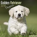 Golden Retriever Puppies Calendar - Dog Breed Calendars - 2017 - 2018 wall Calendars - 16 Month by Avonside