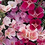 100+ Monarch Godetia Flower Seeds / Grandiflora Pink Shades / Annual