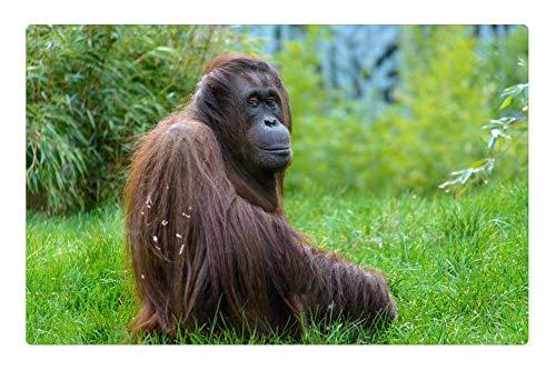 Tree26 Indoor Floor Rug/Mat (23.6 x 15.7 Inch) - Animal Monkey Zoo Monkey Portrait Orang-Utan ()