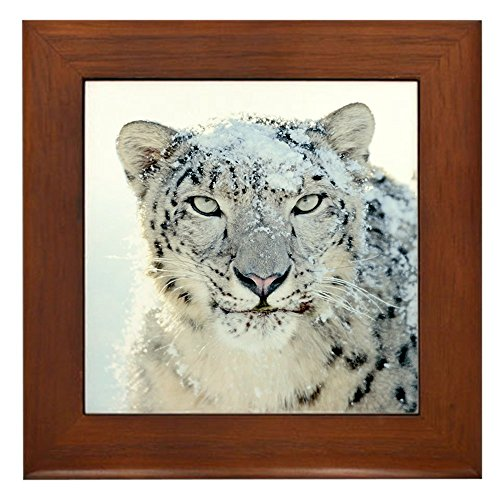 Framed Tile Snow Leopard HD