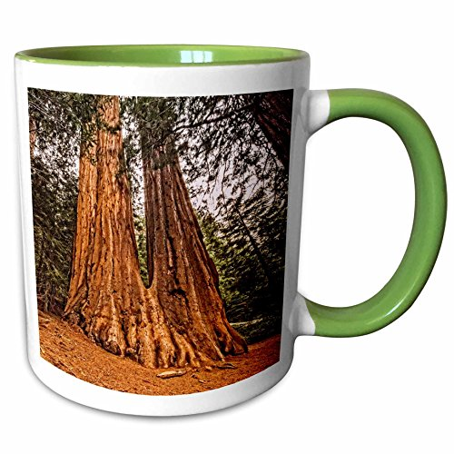 3dRose 200294_7 Conjoined Redwood Trees in Sequoia National Park, Green Mug 11 oz, White