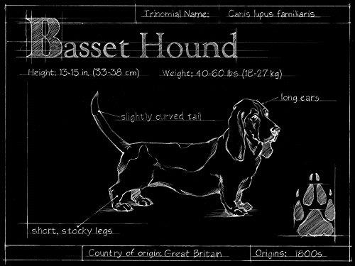 Bassett Collection - Blueprint Bassett Hound by Ethan Harper Art Print, 19 x 14 inches
