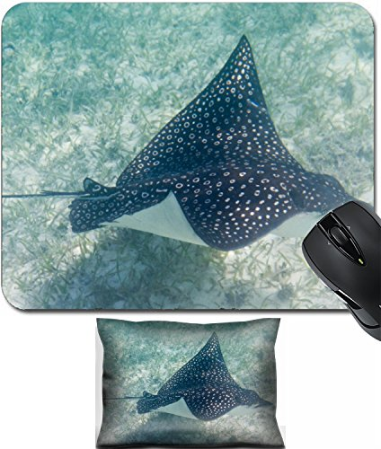 MSD Mouse Wrist Rest and Small Mousepad Set, 2pc Wrist Support design 24593130 underwater close up of a sting ray the coast Belize (Stingray Mouse Pad)