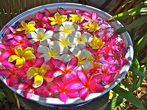 Tollyee Bowl of Plumeria Flowers Beautiful Art Print On Canvas Wall Art for Home Decoration Wooden Framed 12