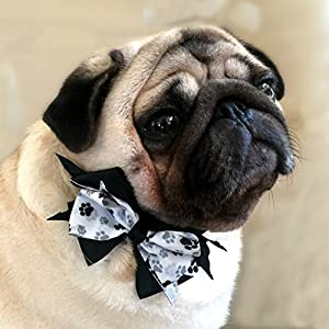 Cutesy Pet Dog Collar with Designer Bow | Comfortable and Strong | Gray Paws | 4 Different Styles in 5 Different Sizes