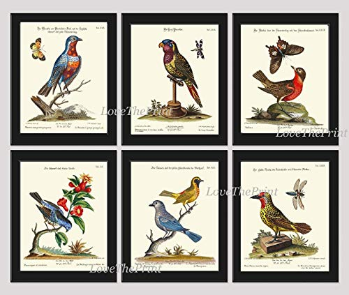 - Bird Print Set of 6 Art Prints Antique Beautiful Blue Red Yellow Birds Parrot Butterfly Dragonfly Flowers Tree Branch Green Leaves Home Room Decor Wall Unframed CTB