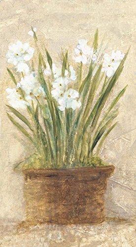 Cheris Garden (Garden White Narcissus Panel by Cheri Blum Art Print, 15 x 28 inches)