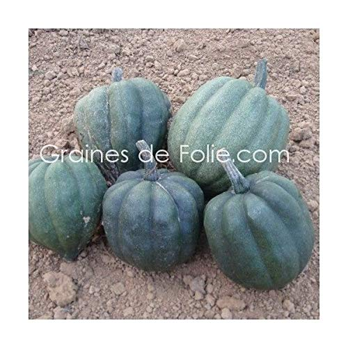 Squash Queen Table Seeds Squash Seeds -