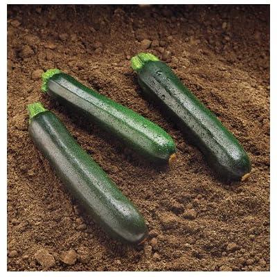 Organic Black Beauty Zucchini 25+ Seeds : Zucchini Plants : Garden & Outdoor