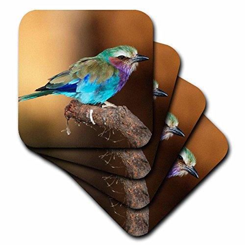 3dRose Kenya, Maasai Mara National Reserve, Lilac-Breasted Roller Perching. - Ceramic Tile Coasters, Set of 4 (cst_209187_3) - Lilac Breasted Roller