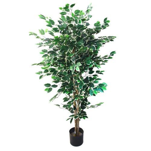 House Trees Indoors: Amazon.com