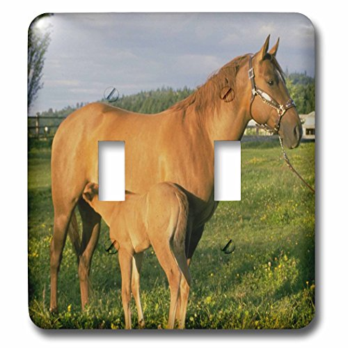 3dRose TDSwhite - Horse Equine Photos - Nursing Foal Field - Light Switch Covers - double toggle switch (lsp_285527_2)