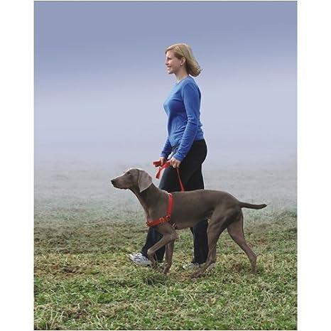 PetSafe Easy Walk Arnés (Pequeño/Mediano de/azul). Suministros de ...