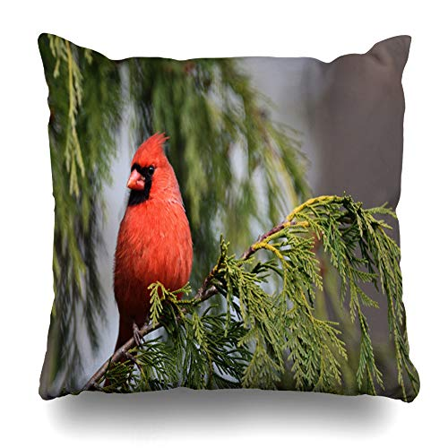 (Ahawoso Throw Pillow Cover Square 16x16 Woods Outdoors Northern Cardinal Perched On Tree Bird Nature Photography Design Zippered Cushion Case Home Decor Pillowcase)