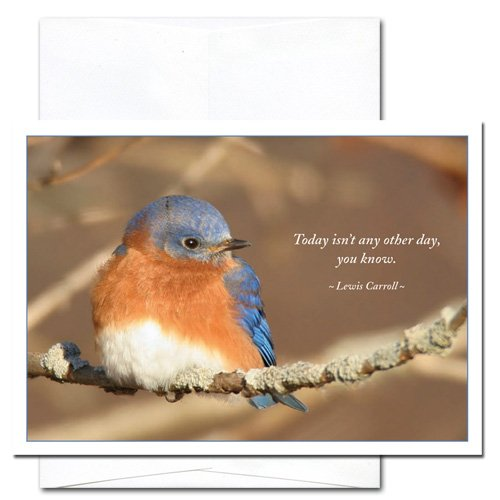 Bluebird: New Year Holiday Cards - box of 10 cards and envelopes