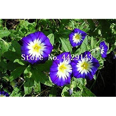 Kasuki 100 Pcs/Bag Rare Star Petunia Blue Bonsai Garden and Patio Potted Plant Morning Glory Flowers Bonsai petuniya Bonsai - (Color: 10): Garden & Outdoor